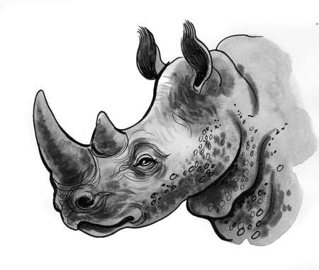 Rhinoceros head. Ink and watercolor sketch