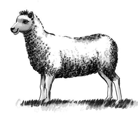 Sheep animal. Ink black and white drawing