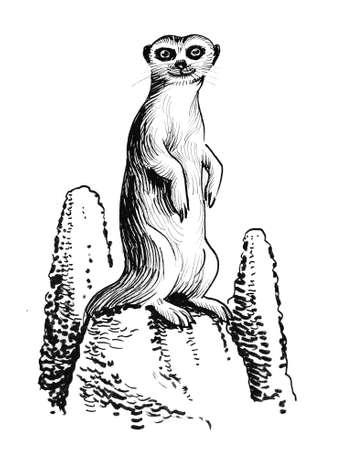 Meerkat animal in savanna illustration.