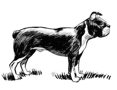 Standing bulldog illustration.
