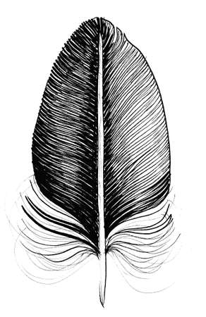 Birds feather. Ink black and white drawing