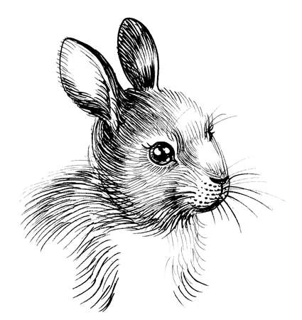 Cute bunny illustration with white background.