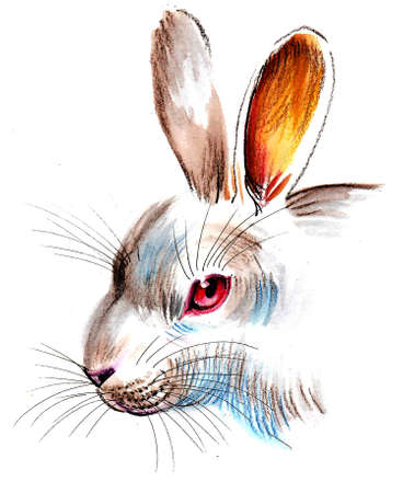 Cute white rabbit illustration.