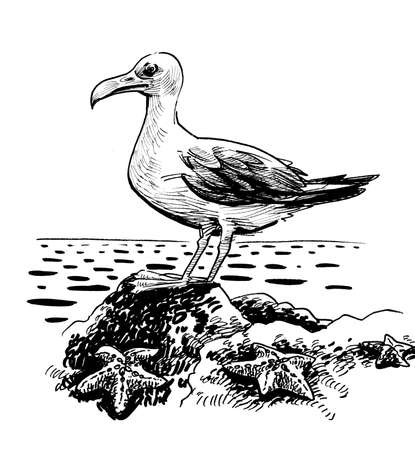Seagull bird sitting on a rock. Ink black and white drawing Zdjęcie Seryjne
