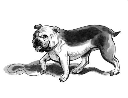 Cute walking bull dog. Ink and watercolor drawing