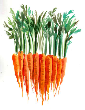 Bunch of carrots. Ink and watercolor drawing