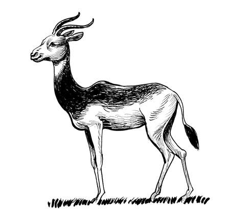 African antelope. Ink black and white sketch