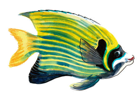 Tropical coral fish. Ink and watercolor drawing