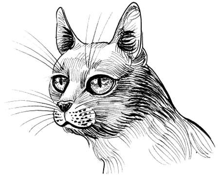 Cat's head. Ink black and white drawing Standard-Bild