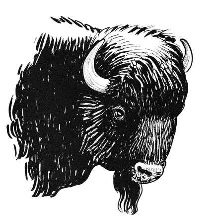 Bison bull head. Ink black and white drawing Standard-Bild