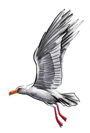 Flying seagull bird. Ink and watercolor drawing Standard-Bild
