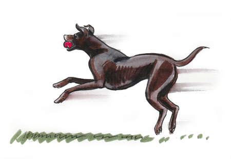 Black running dog with red ball. Ink and watercolor drawing Standard-Bild