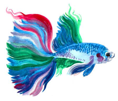 Colorful aquarium fish. Ink and watercolor drawing