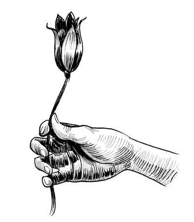 Hand holding tulip flower. Ink black and white drawing