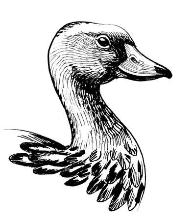 Goose head. Ink black and white drawing