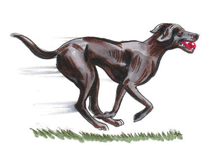 Black dog with a red ball in its mouth running fast. Ink and watercolor drawing Standard-Bild