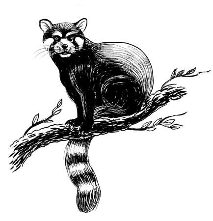 Wild animal on a tree. Ink black and white drawing
