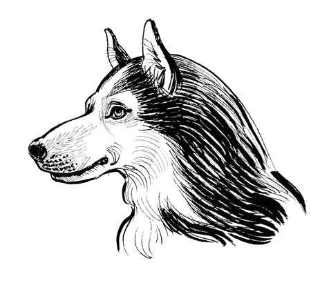 Husky dog on a tree. Ink black and white drawing Standard-Bild
