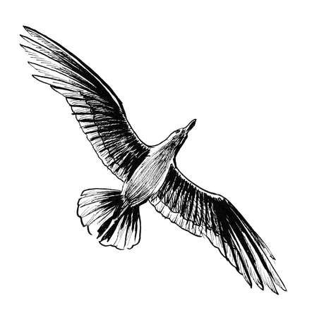 Flying seagull bird. Ink black and white drawing