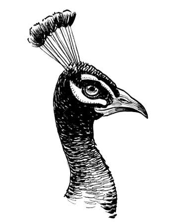 Peacock bird head. Ink black and white drawing