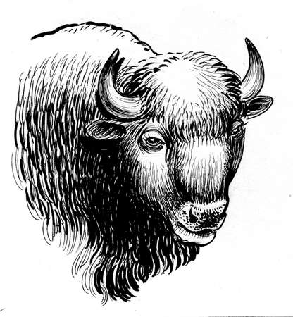 Bison bull head. Ink black and white drawing 版權商用圖片