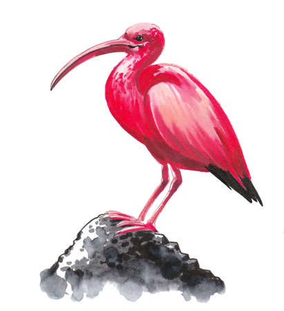 Pink bird sitting on a rock. Ink and watercolor drawing 版權商用圖片