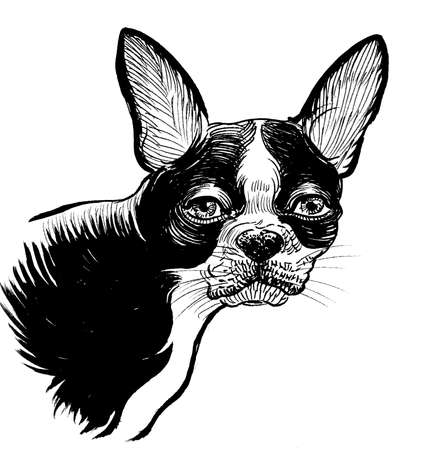 Cute bull dog puppy. Ink black and white drawing