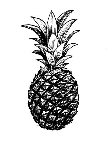 Pineapple fruit. Ink black and white drawing