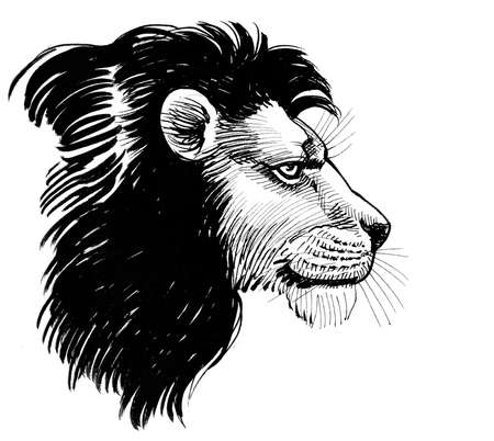 Lion head with a mane. Ink black and white drawing 版權商用圖片