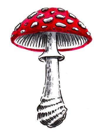 Fly agaric mushroom. Ink and watercolor drawing