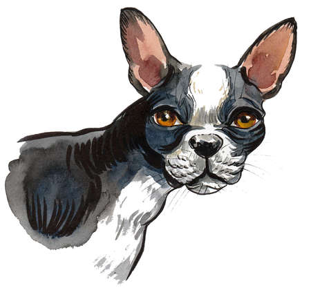 French bull dog puppy. Ink and watercolor drawing