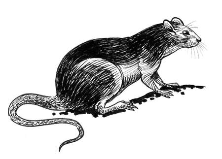 Rat animal. Ink black and white drawing
