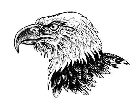 Eagle head. Ink black and white drawing 版權商用圖片
