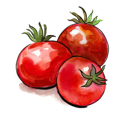 Three red ripe juicy tomatoes. Ink and watercolor drawing