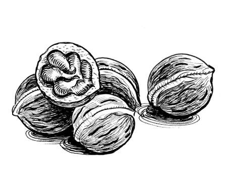 Bunch of walnuts. Ink black and white drawing