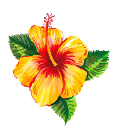 Yellow hibiscus flower. Ink and watercolor drawing