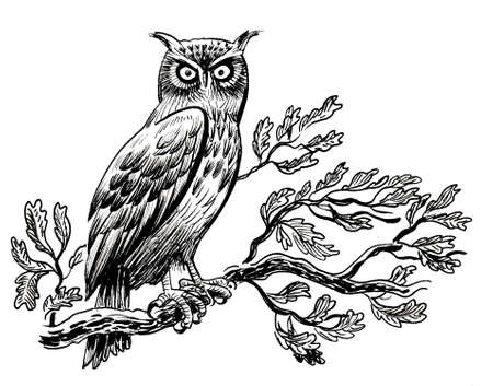 Owl bird on an oak tree branch. Ink black and white drawing 版權商用圖片