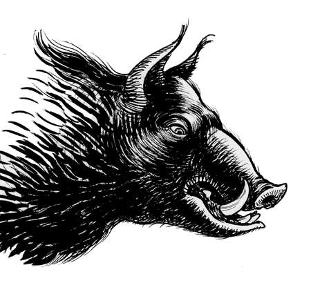 Wild boar head. Ink black and white drawing 版權商用圖片