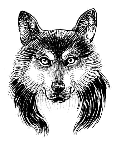 Wolf head. Ink black and white drawing Banque d'images