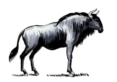 African antelope gnu. Ink and watercolor drawing 스톡 콘텐츠