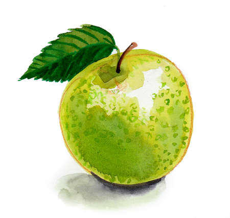 Green fresh juicy apple fruit. Ink and watercolor drawing
