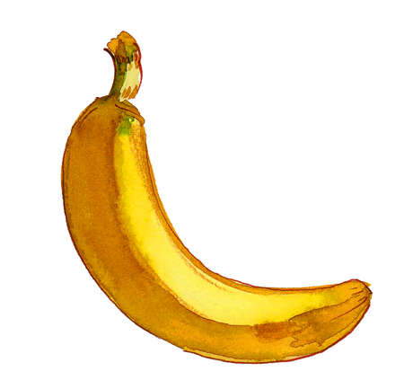 Yellow banana fruit on white background. Ink and watercolor drawing 스톡 콘텐츠