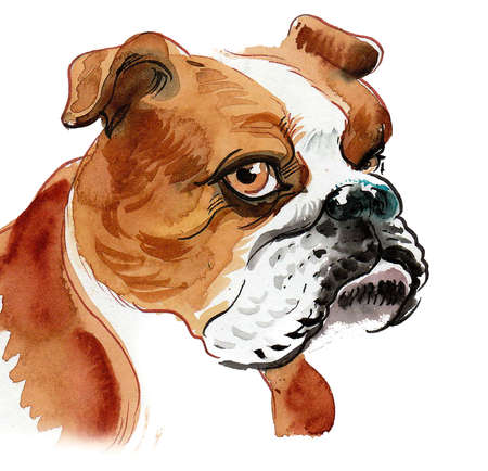 Cute bull dog puppy. Ink and watercolor drawing