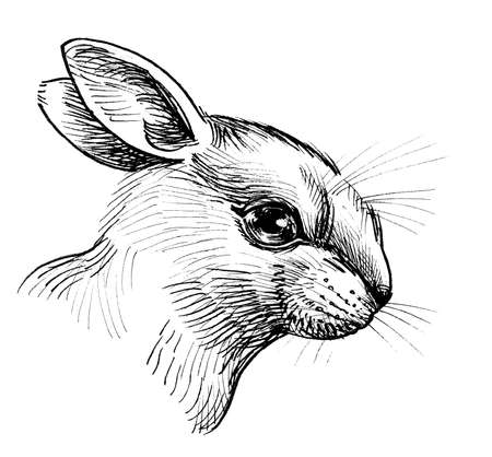 Cute rabbit head. Ink black and white drawing