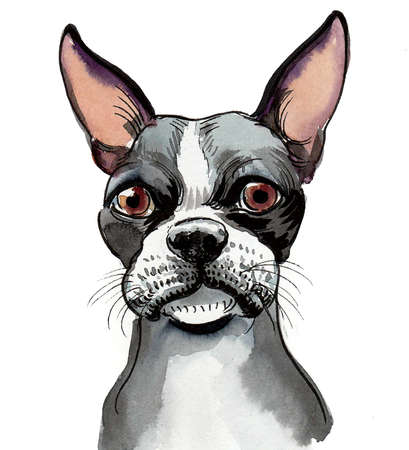 Bull dog puppy head. Ink and watercolor drawing