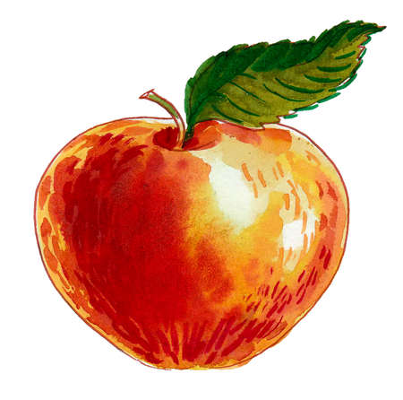 Fresh juicy sweet apple fruit with a green leaf on white background.  Ink and watercolor drawing 스톡 콘텐츠