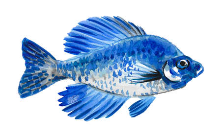 Coral tropical fish on white background. Ink and watercolor drawing Reklamní fotografie