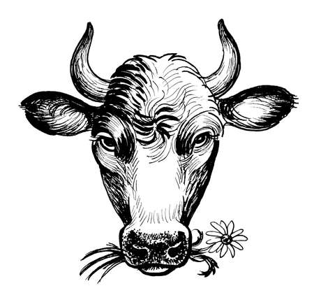 Cow chewing wild flower. Ink black and white drawing 스톡 콘텐츠