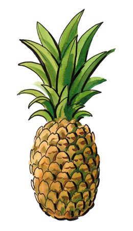 Fresh sweet juicy pineapple fruit. Ink and watercolor drawing