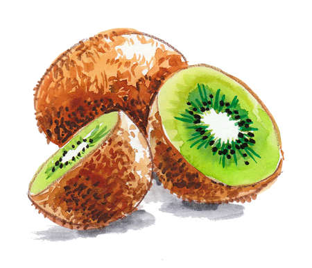 Ripe fresh juicy kiwi fruit. Ink and watercolor drawing